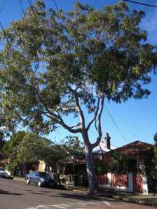 "Council said this tree was suffering from ""whole tree failure."""
