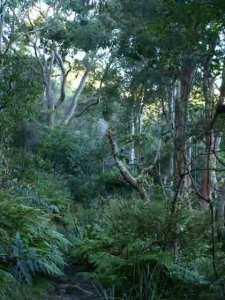 Girraween Park Wolli Creek