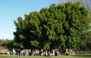 Another view of the party - look at the size of these trees!