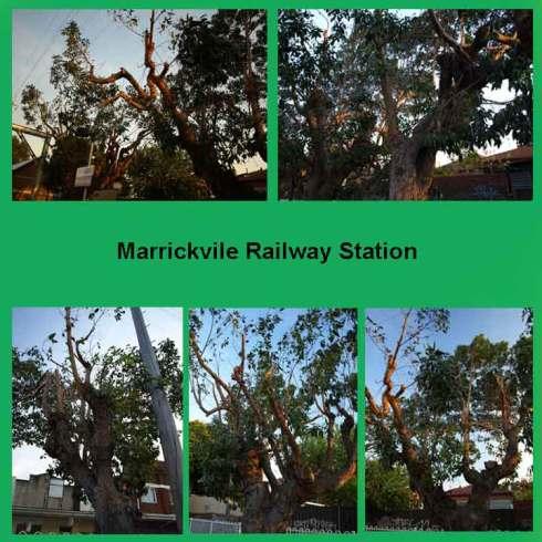 Marrickville-Railway-Stn-trees