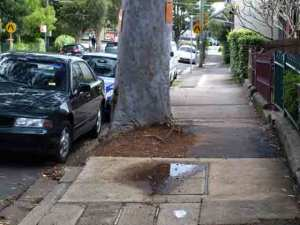 trees impact on footpath outside 138 Cambridge St Stanmore