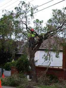 TreePruning