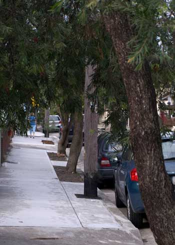Pedestrian Footpath Saving Our Trees Marrickville