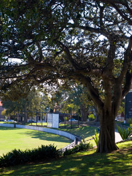 A view of historiv Petersham Oval