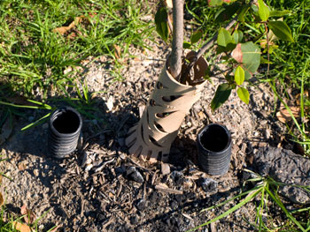 ag-pipe | SAVING OUR TREES - Marrickville municipality