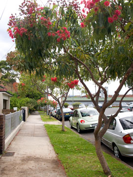 Red flowering gum saving our trees marrickville municipality as mightylinksfo