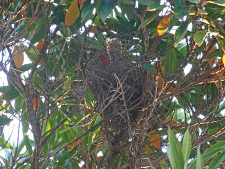 red bird nest and - photo #46