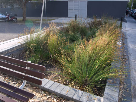 This is a lovely rain garden next to Camperdown Memorial Rest Park on Church Street.