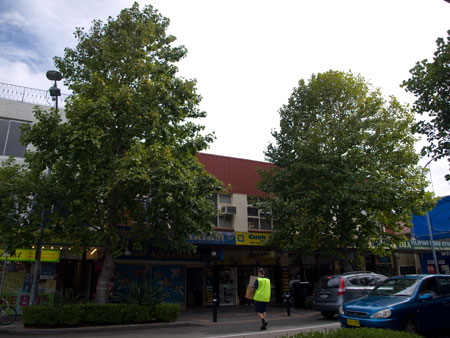 This is how this section of Marrickville Road looked before these 2 Tulip trees were removed