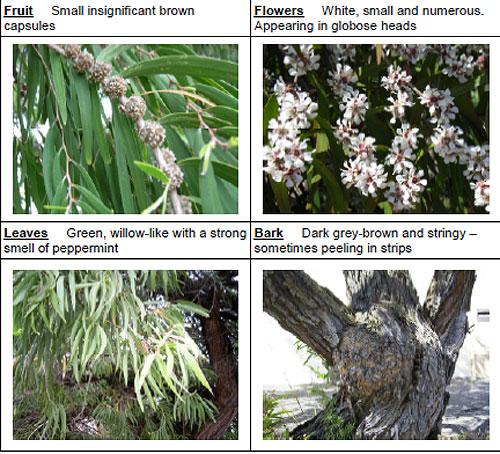 Randwick City Council Tree Identification Manual | SAVING