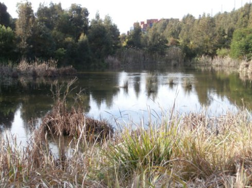 Tempe Wetlands - now safe from the WestConnex Motorway
