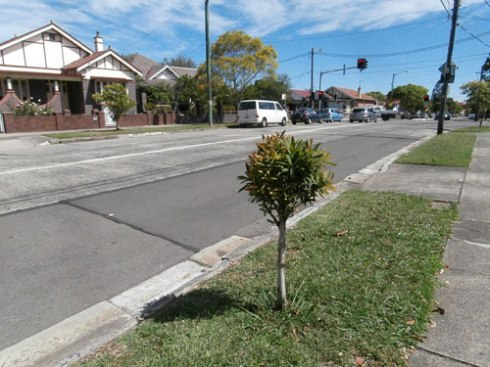 The streetscape along this section of Livingstone Road Marrickville