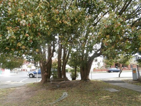 I think this lovely cluster of trees will be going from the corner of Park & Sydenham Roads.