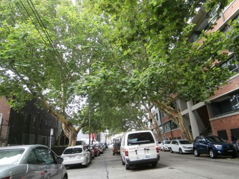 This is the canopy of McEvoy Street Alexandria.  I think it looks wonderful.   It was also cool walking along this street.