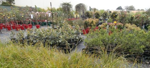 Rockdale Community Nursery - paradise for plant lovers.
