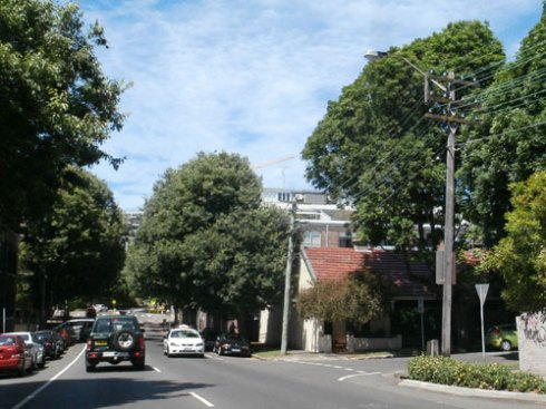 Two street trees to go from Salisbury Road Camperdown