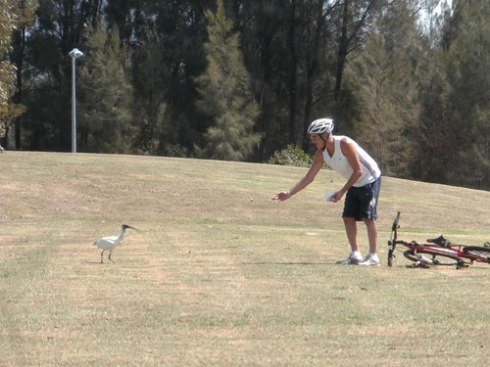 Here is Paul the Ibis Rescuer hard at work.