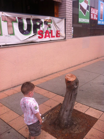 "A local father was out having a walk with his little boy when they came across the Illawarra Road street tree.  When his son saw what was left of the tree he looked & said, ""A broken tree.""  You can tell that he is quite taken aback with what he is looking at."