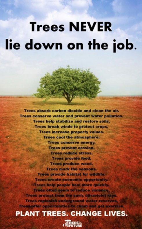19 great things trees do to help both people & the environment. This wonderful poster comes from Trees for the Future - http://www.treesforthefuture.org - with thanks