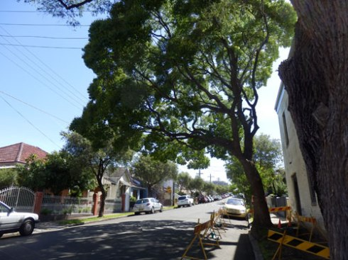 Westbourke Street tree to be removed.