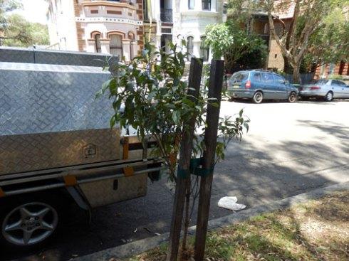 Second tree outside 46-48 John Street
