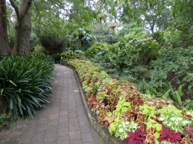 Coleus border adding colour to a pathway.  There were many flowers all through the gardens.