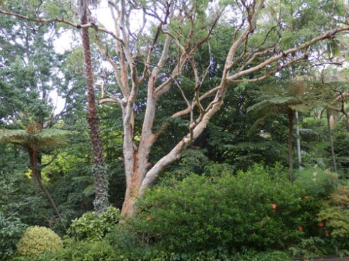 There are all kinds of trees throughout the garden.  Most of them are of significant size.