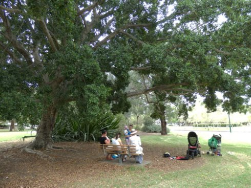 Mums with their babies sit in the shade of a mighty Hill's Fig tree.  There were so many lovely places to sit in the shade.