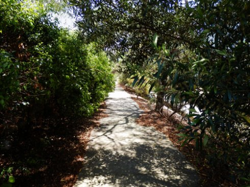 Pedestrian pathway lined with Lilly Pilly trees