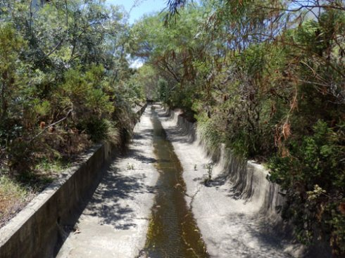Both sides of this stormwater canal in Alexandria has been naturalized by Sydney Water making it a wildlife corridor in an area that is mostly industrial & therefore heavily concreted.