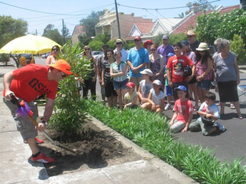 Mayor Macri planting a street tree in Lincoln Street with the residents looking on.  The grasses by the kerb were donated by Council.