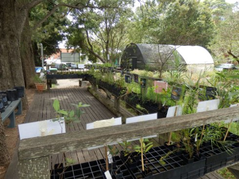Plants for sale at Marrickville Council Community Nursery