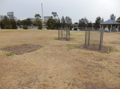 Maybe with some community involvement the vandalised trees at Tempe Reserve could have been replaced at a much lower cost than the $7,000 it would cost Council to do it