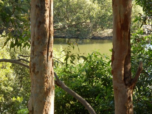 View of the Cooks River from Warren Park