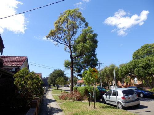 Public Tree Removal In Tempe