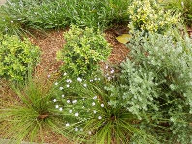 Verge garden close-up