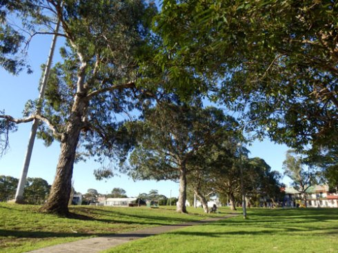 The ramaining row of spectacular Blue Gums in Camdenville Park.
