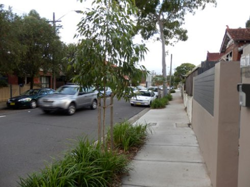Another view with new Gum trees.