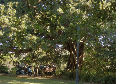 These men meet daily for a few hours to sit under the shade of a lovely Fig tree & chat.  It's enormously good for their health.