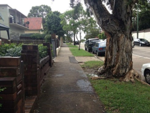 Marrickville Council's photo of the street tree outside 3/195 Wardell Road voted to be removed.  Photo used with thanks.