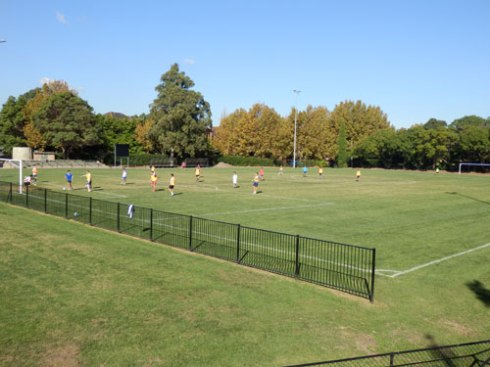 Arlington Recreation Reserve is a small place. Marrickville Council's plan to cover this grass with synthetic turf is concerning many in the local community.