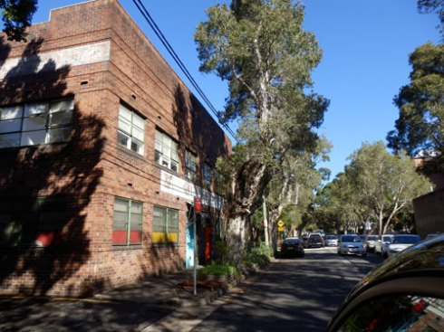 Tall shady street trees are the norm in Chippendale