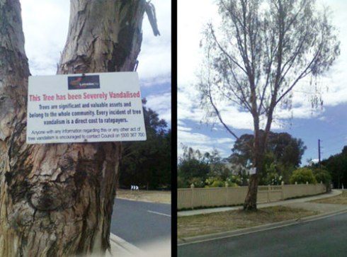 Latrobe City Council attached this sign on this tree recently.  Photo by Trace Finch with many thanks :-)