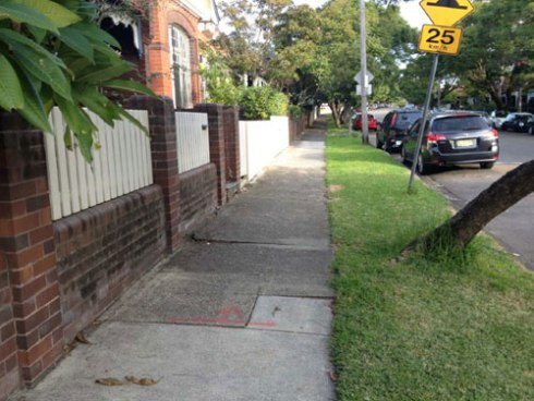 Showing the footpath damage caused by this street tree outside 18 Cardigan Street Stanmore.  Photo by Marrickville Council with thanks.