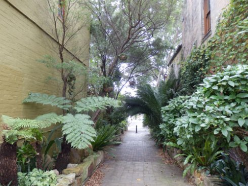 Shepherd Lane in Newtown. I thought this was very beautiful & imagine that once it was just a driveway for cars.