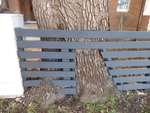 The second tree with the fence built around it.  I think this is wonderful work.