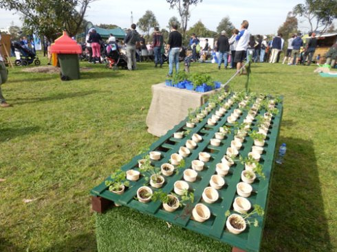 Give-away plants in containers meant to go straight into the ground at last year's National Tree Day event at Sydney Park.