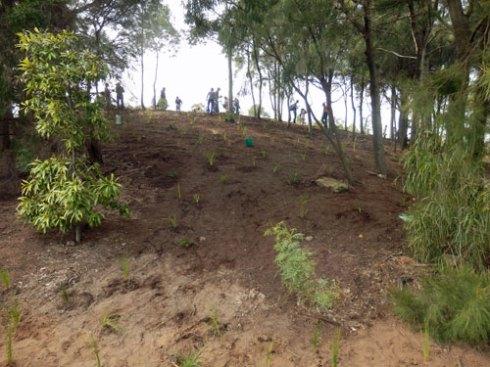More planting at Sydney Park