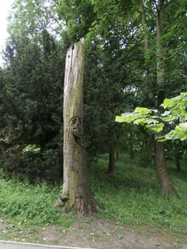 A dead tree left in place for homes for wildlife.  Someone has carved a jester face in the trunk.