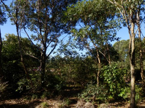 Sydney Park has wonderful areas of real habitat for wildlife.